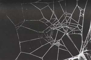caffeinated spider's web