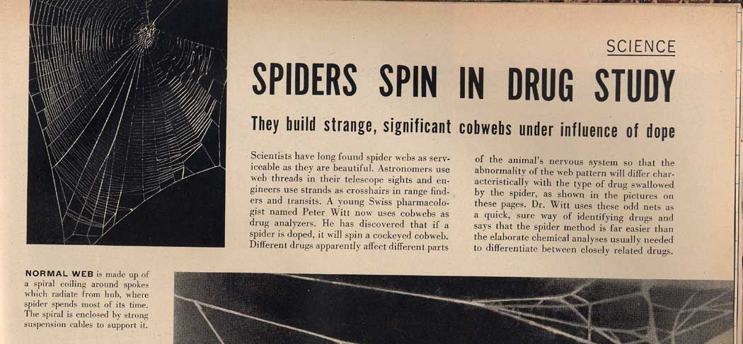 spiders on dope